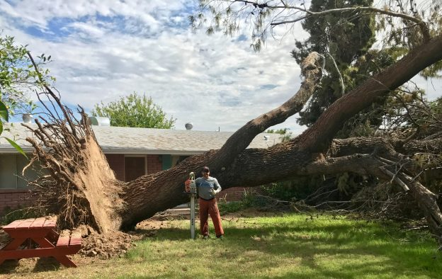 Huge Storm damaged Pine Tree Removal In Scottsdale Arizona