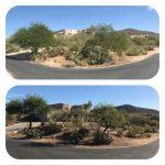 Tree Trimming Scottsdale Arizona