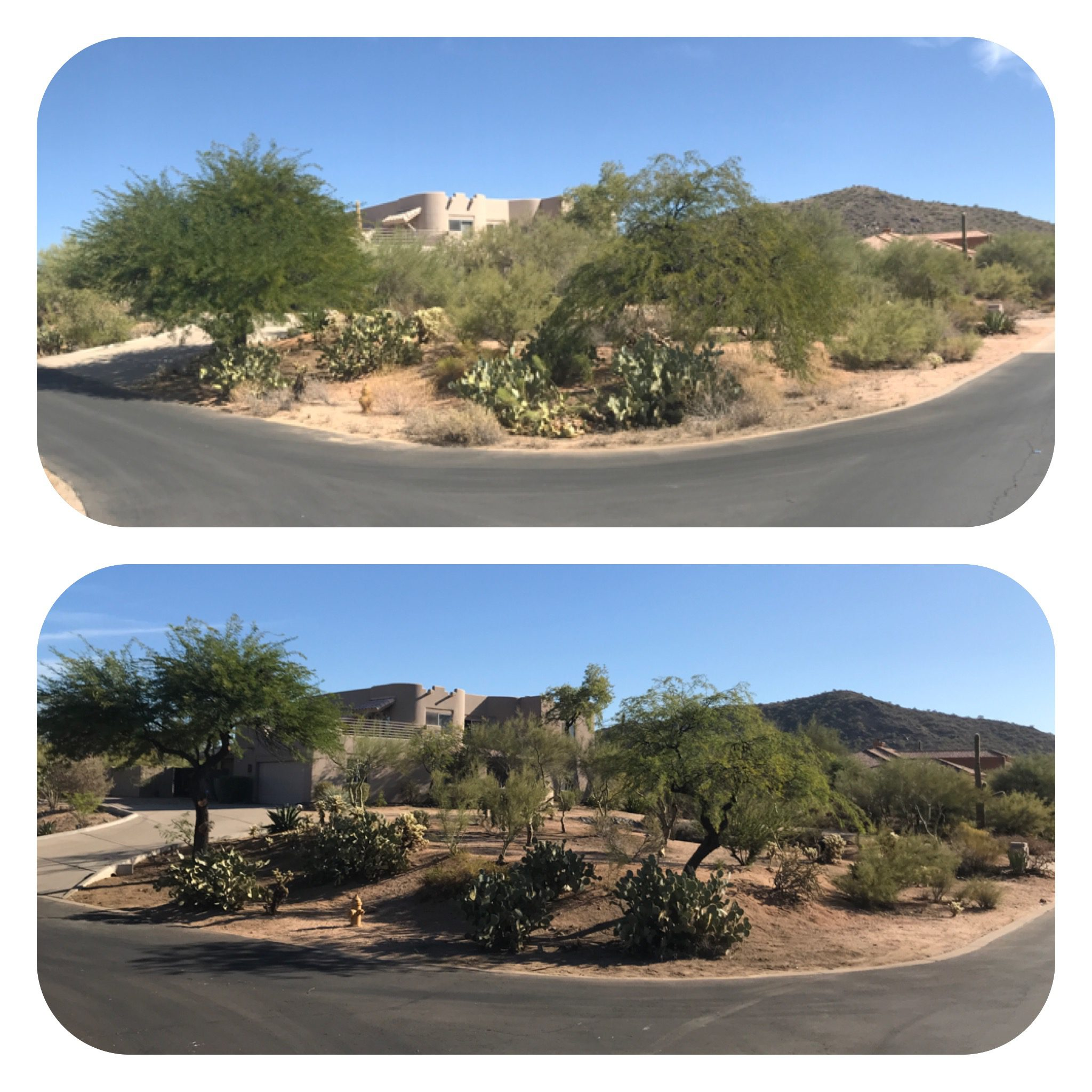 Tree Trimming Scottsdale Arizona