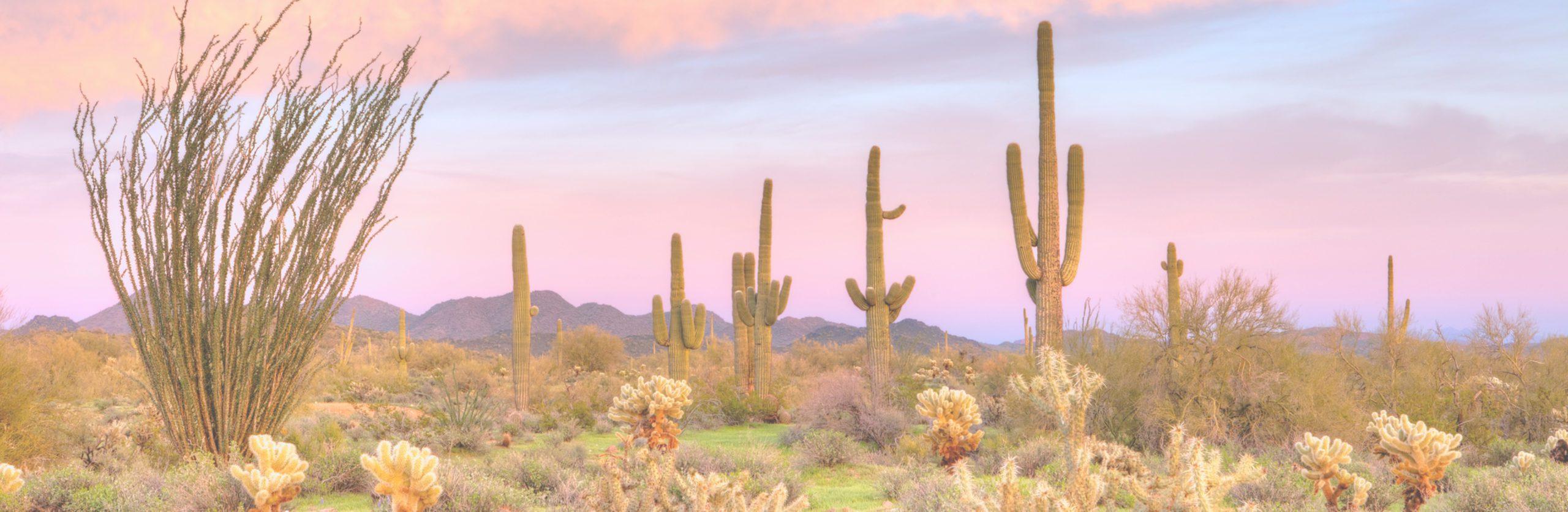 Arizona Home Testimonials